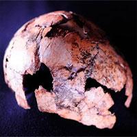 Phát hiện hóa thạch người đứng thẳng lâu đời nhất