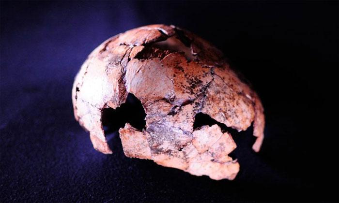 Hộp sọ Homo erectus được khai quật tại Nam Phi.