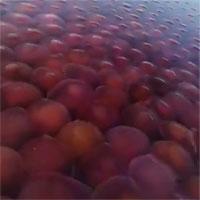 Hàng nghìn sứa hồng xâm chiếm bãi biển trong mùa dịch