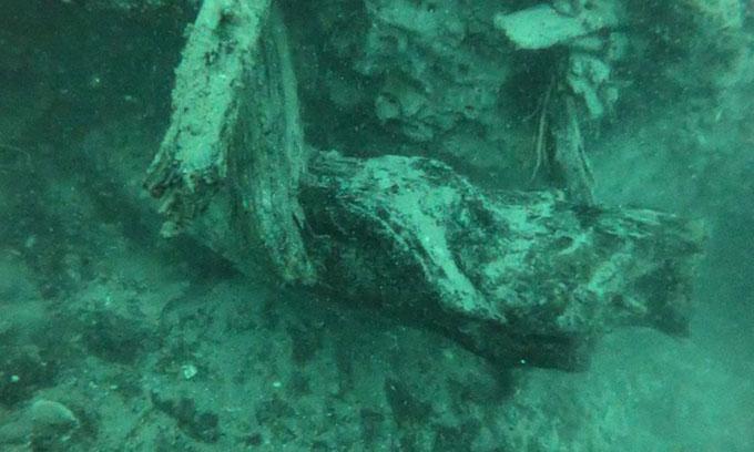 Một gốc cây vẫn còn được bảo quản tốt dưới đáy biển.