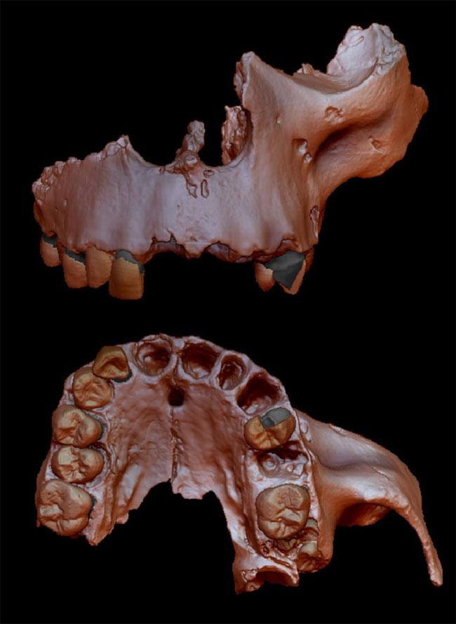 Tái hiện mẫu vật của Homo antecessor được tìm thấy tại Tây Ban Nha.