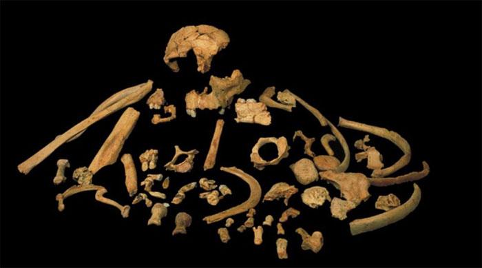 Các mẫu vật của chủng người Homo antecessor được tìm thấy tại Tây Ban Nha.