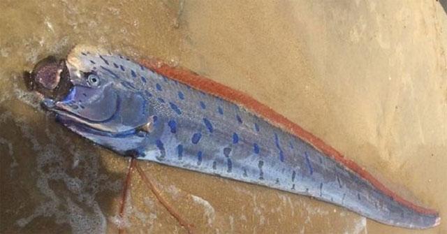 Loài cá sống ở đáy biển sâu thường nhạy cảm hơn với những tác động của chuyển động đứt gãy.