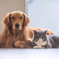 Chó và mèo có lây lan Covid-19?