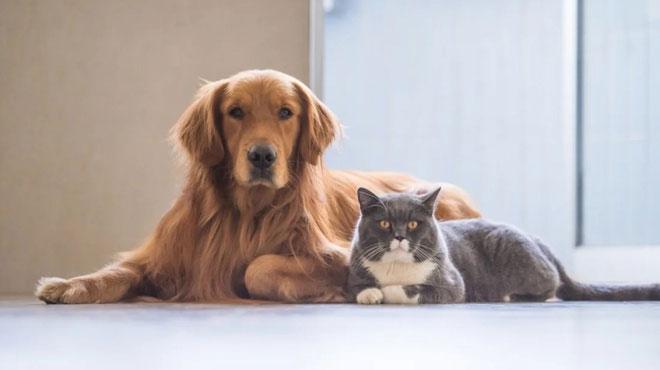 Nghi vấn thú cưng có thể là nguồn lây nhiễm virus corona khiến nhiều người lo lắng.