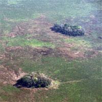 Cây trồng được thuần hóa ở Amazon từ 10.000 năm trước