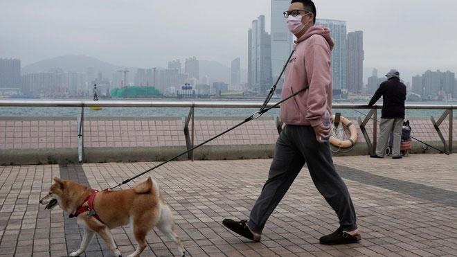 Nếu nghi ngờ mình nhiễm bệnh, chúng ta cần gửi thú cưng cho người khác chăm sóc.