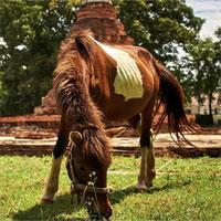 Virus lạ khiến ngựa chết hàng loạt ở Thái Lan gây lo ngại đại dịch mới
