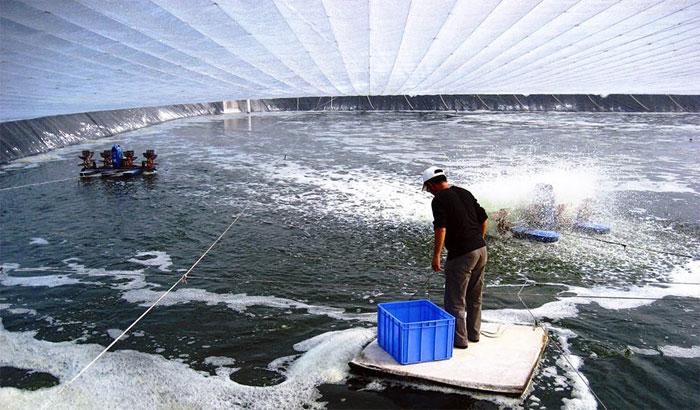Một cơ sở nuôi tôm lớn tại Trung Quốc. (Ảnh minh họa: Aqua Culture Alliance).