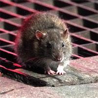 """Covid-19 sẽ khiến loài động vật đáng sợ này """"tiến hóa"""""""