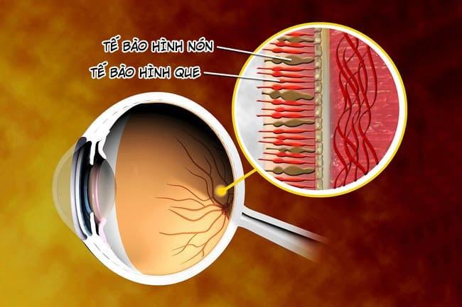 Cơ chế nhận biết màu sắc của mắt