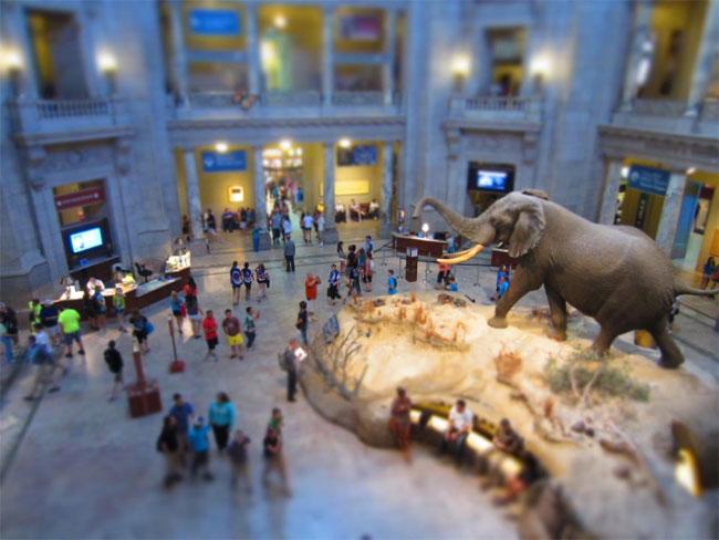 Bảo tàng Lịch sử Tự nhiên Quốc gia Mỹ