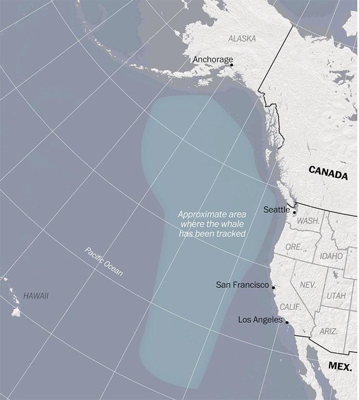 Khu vực 52 Blue được các nhà hải dương học phát hiện bài hát nó phát ra những năm 1990.