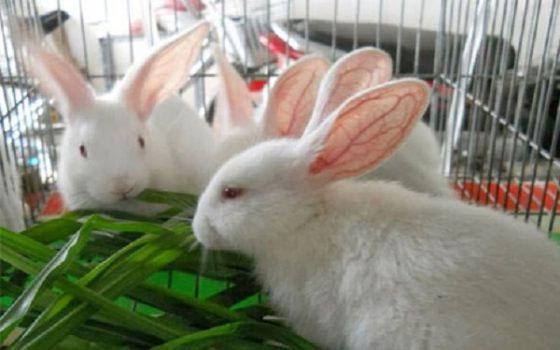 Thỏ hầu như là loại động vật duy nhất có khả năng tự tổng hợp vitamin cho cơ thể.