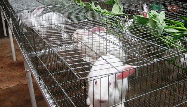 Thỏ là loài gia súc nhạy cảm với các tác nhân ngoại cảnh