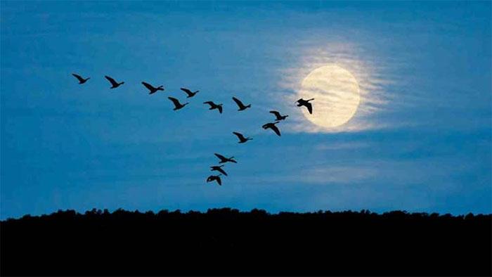 Di cư theo mùa là loại di cư phổ biến nhất ở chim.