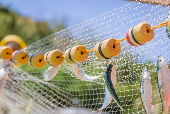 Lưới, dây câu cá và dây thừng là những nguồn rác nhựa chính gây ô nhiễm môi trường biển.
