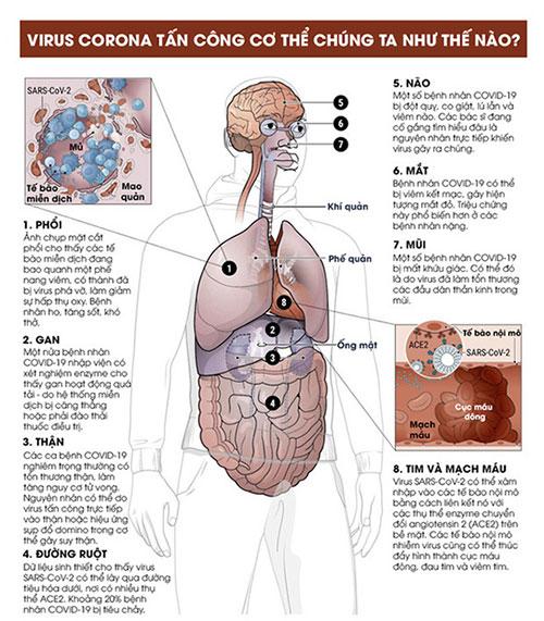 Cách virus corona tấn công cơ thể người