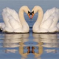14 động vật chung thủy nhất thế giới tự nhiên