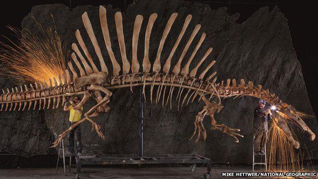 Mô hình bộ xương của loài khủng long này được trưng bày ở Washington DC, Mỹ