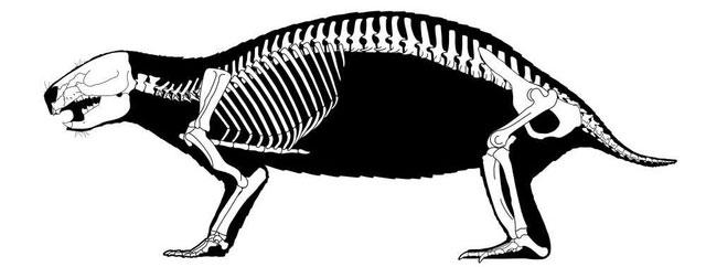 Hình ảnh bộ xương của Adalatherium hui sau khi được sắp xếp lại.