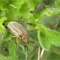 Hàng triệu người se không còn bị dị ứng nhờ một loài bọ nhỏ bé