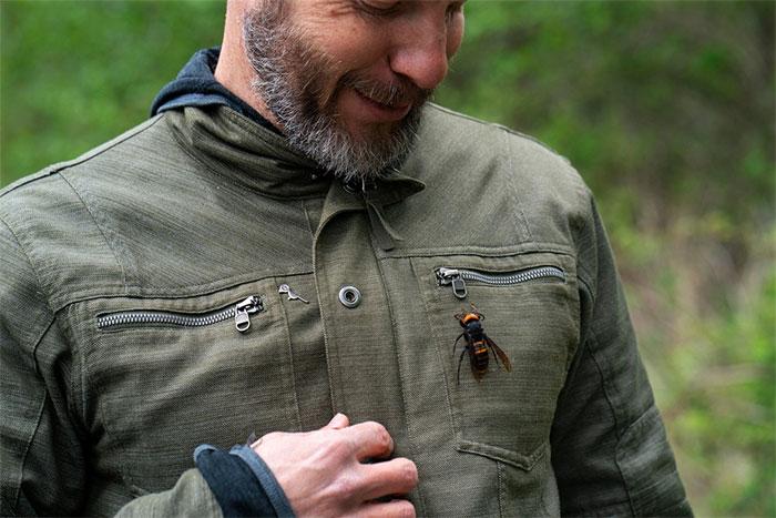 Ông Chris Looney đặt xác một con ong bắp cày khổng lồ châu Á lên áo khoác