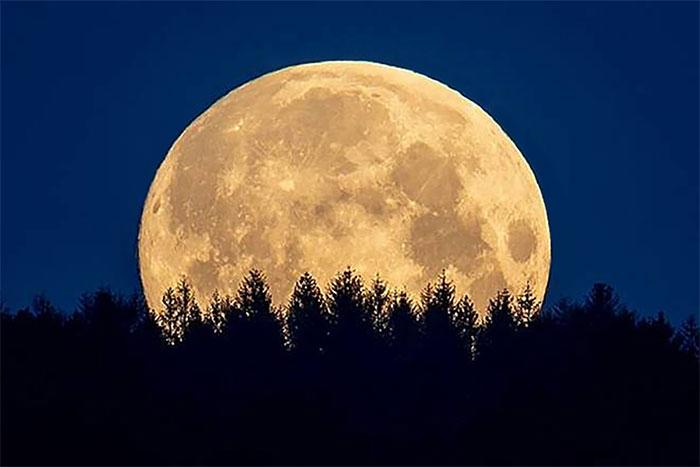 Siêu trăng xuất hiện phía trên rặng cây tại dãy núi Taunus, gần thành phố Frankfurt, Đức.