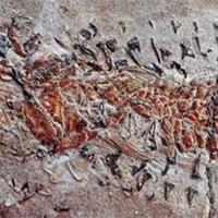 Mực tham ăn dẫn tới cái chết khủng khiếp dưới đáy biển cách đây 200 triệu năm