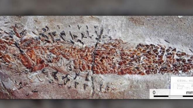Hóa thạch 200 triệu năm tuổi được tìm thấy ở Anh.