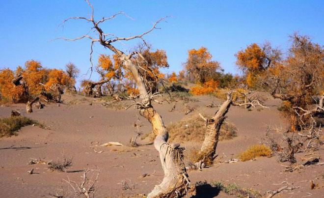 Sa mạc hóa hay hoang mạc hóa là hiện tượng suy thoái đất đai ở những vùng khô cằn