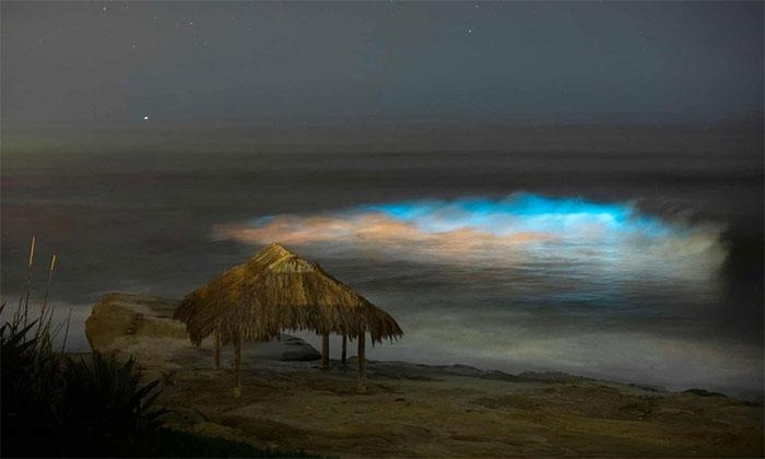 Hiện tượng thiên nhiên kỳ thú này được quan sát lần đầu từ năm 1901 dọc theo các bãi biển ở San Diego.