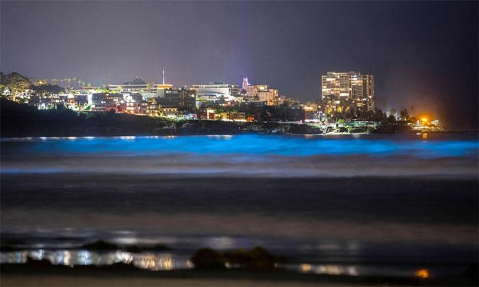 Sóng biển phát quang là hiện tượng chỉ xảy ra vài năm một lần dọc theo bờ biển phía nam bang California.