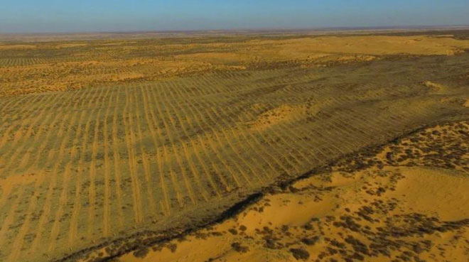 Rất khó để trồng cây trong sa mạc