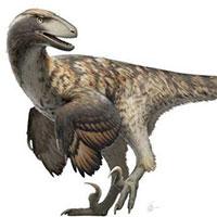 Bộ phim Công viên kỷ Jura đã sai: Khủng long Velociraptor không đi săn theo bầy