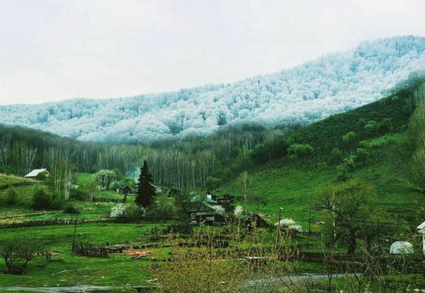 Đây là khung cảnh khó tin của nước Cộng hòa Altai khi bên dưới mùa xuân mà bên trên thì tuyết vẫn đang rơi.