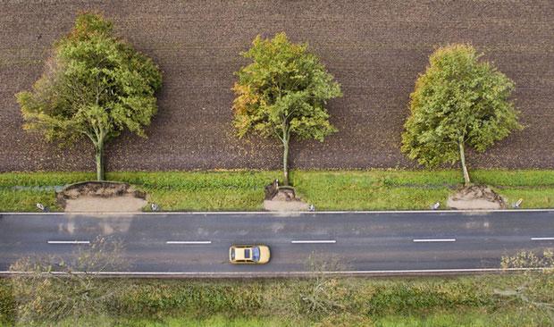 Chỉ là những cái cây đổ rạp cũng đủ đánh lừa thị giác của con người.