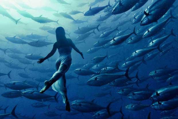 Vận động viên bơi lội Nhật Bản chụp ảnh cùng đàn cá.