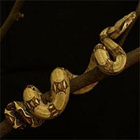 Vì sao rắn có thể trèo leo lên cây mà không bị trượt?