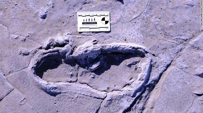 Dấu chân hóa thạch được đánh giá là vô cùng độc đáo.