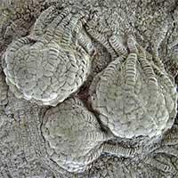 """Sinh vật 80 triệu tuổi như """"ngoài hành tinh"""" hiện diện khắp Trái đất"""