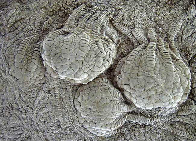 Cấu trúc quả bóng đặc biệt vững chắc xuất hiện trên cơ thể các sinh vật lạ