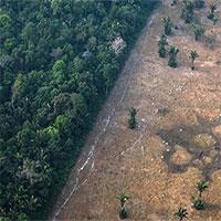 Rừng Amazon có thể trở thành nguồn lây virus corona tiếp theo