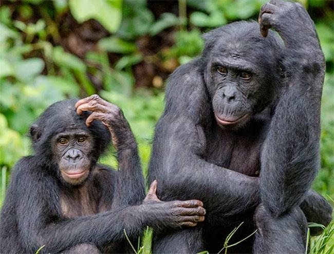 Tất cả các động vật có vú đều có lông trên cơ thể.