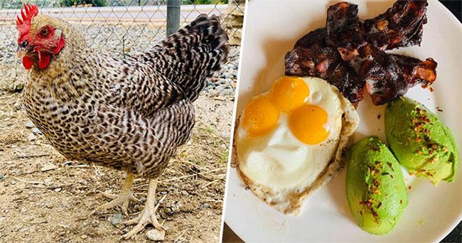 Con gà Darlene đẻ ra trứng có ba lòng đỏ hiếm có trên thế giới.