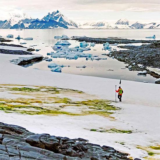 Một khu vực với tuyết chuyển màu xanh do sự phát triển của vi tảo ở Nam Cực.