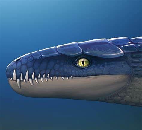 Hình ảnh phục dựng răng của Dakosaurus.