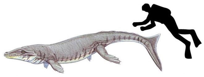 Tuy là một loài cá sấu, nhưng chúng lại có vẻ ngoài không hề giống bất kỳ loài cá sấu nào mà con người biết đến.