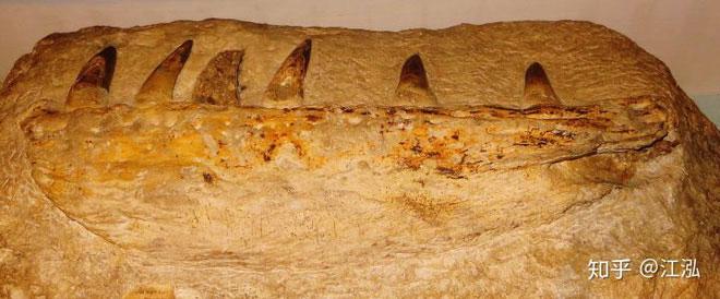 Hóa thạch răng sinh vật cổ đại.
