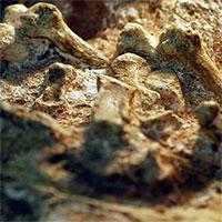"""Bí ẩn sinh vật 2 triệu tuổi mang """"bàn tay của con người"""""""